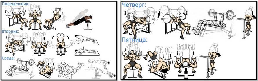 Упражнения для грудных мышц для мужчин в тренажерном зале