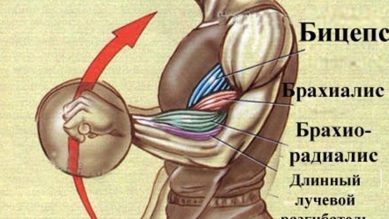 Как накачать предплечья   musclefit