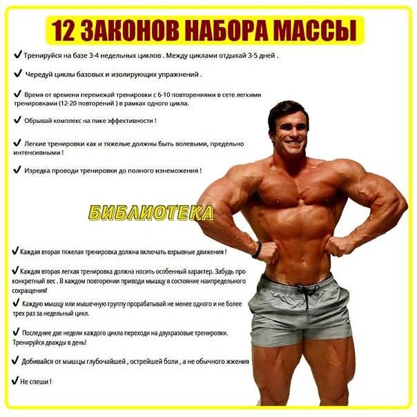 Основные базовые упражнения для набора мышечной массы и техника их выполнения