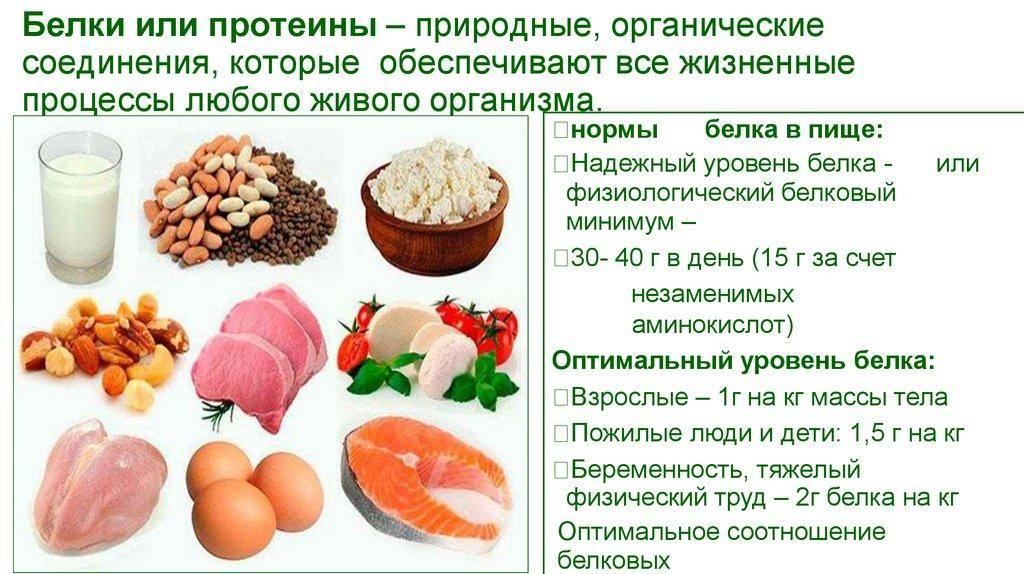 Белки, их функции и роль в питании человека - спортивный портал kmfv