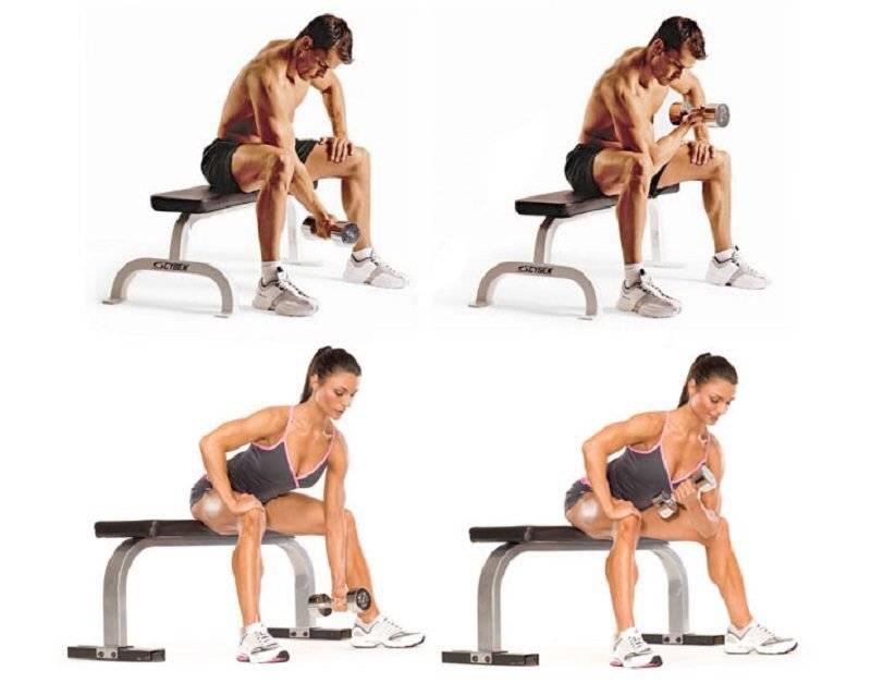 Упражнение концентрированный подъем на бицепс