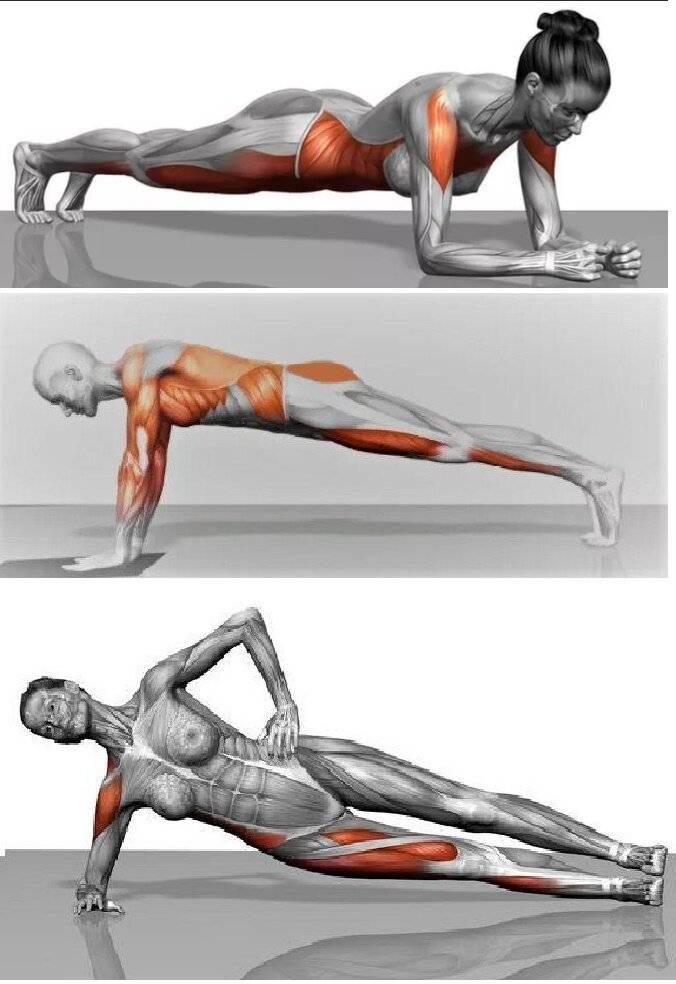 Упражнение боковая планка: как правильно выполнять, какие мышцы работают - tony.ru