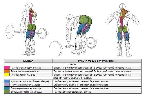 Тренировка мышц спины с гантелями: основные упражнения, принципы и особенности | rulebody.ru — правила тела