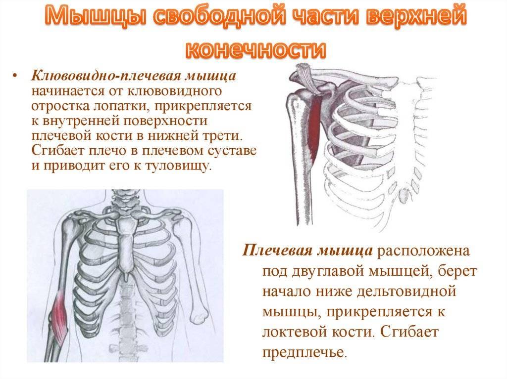 Лечение надостной мышцы плеча в клинике доктора глазкова в москве