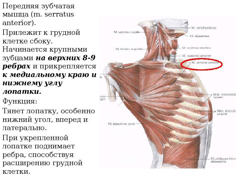 Как правильно укреплять мышцы спины? показывает тренер