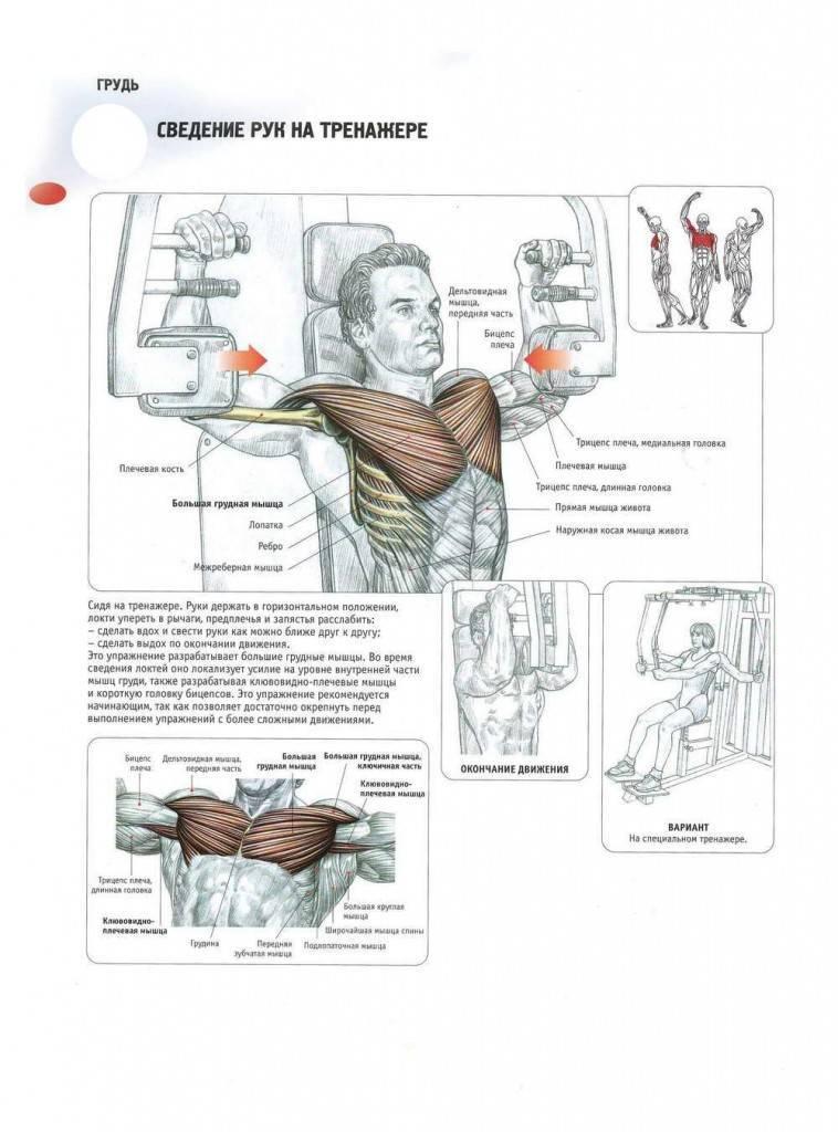 Как эффективно убрать жир с грудных мышц мужчине – полезные советы