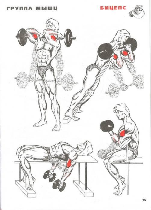 Как накачать грудные мышцы   musclefit
