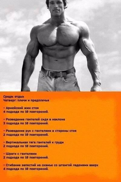 Тренировка бицепса: советы арнольда шварценеггера - rostisila.com
