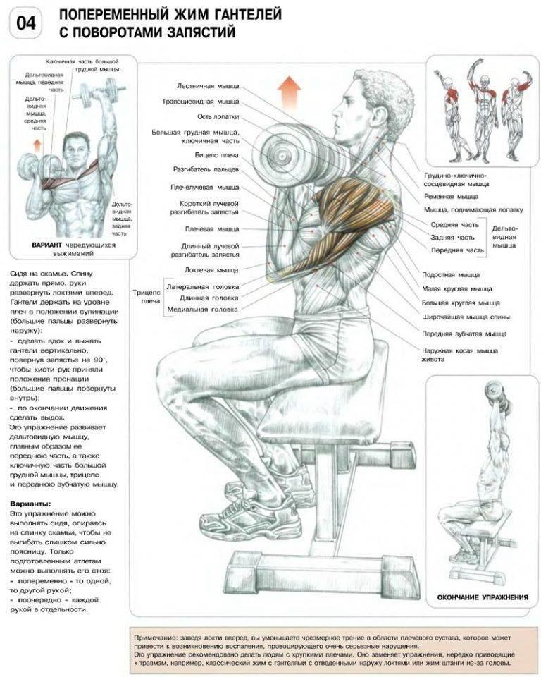 Жим гантелей сидя: техника выполнения упражнения, эффективность