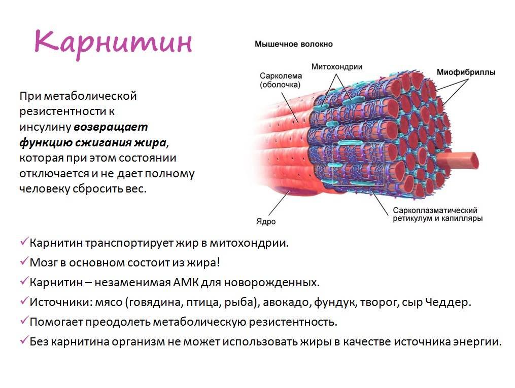 Гипертрофия мышц: обзор принципов тренировки для увеличения массы мышц. часть 1