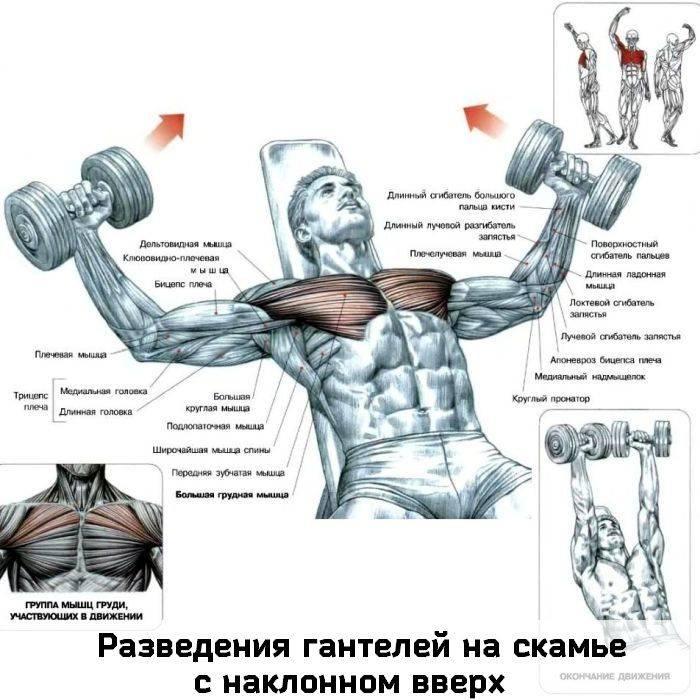 Упражнения на плечи для мужчин в тренажерном зале. как накачать плечи: программа тренировки на массу