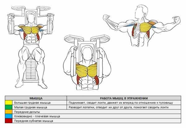 Тренажер-бабочка: на какие мышцы действует, упражнения, отзывы - tony.ru