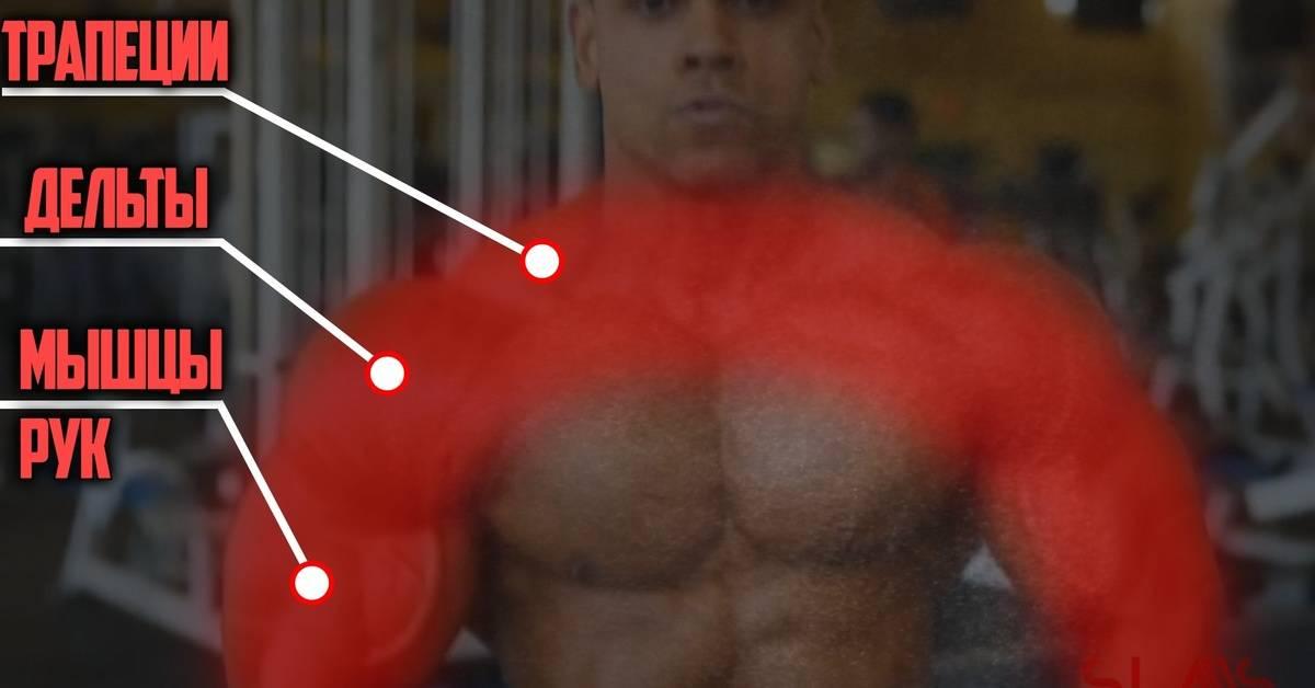 Бодибилдинг: отличие тренировок натурала от химика