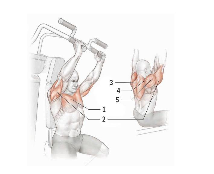 Жим гантелей стоя: правильное выполнение и работающие мышцы
