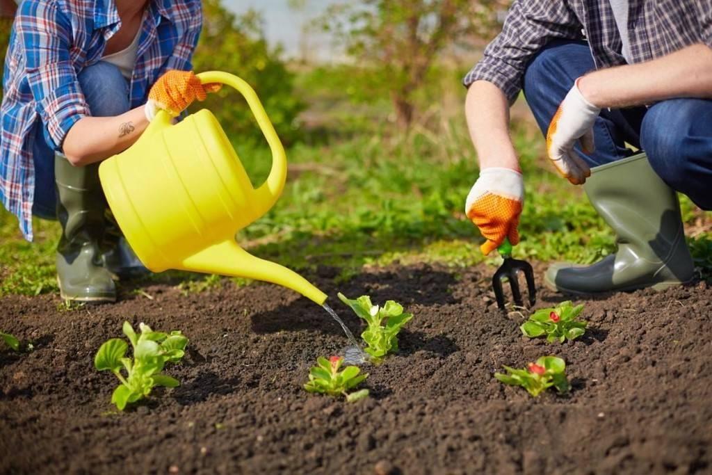 Быстрая перекопка огорода своими руками сподручными средствами