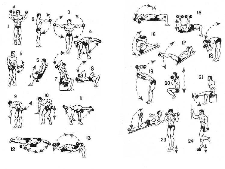 Лучше упражнения с гантелями для дома и зала | musclefit
