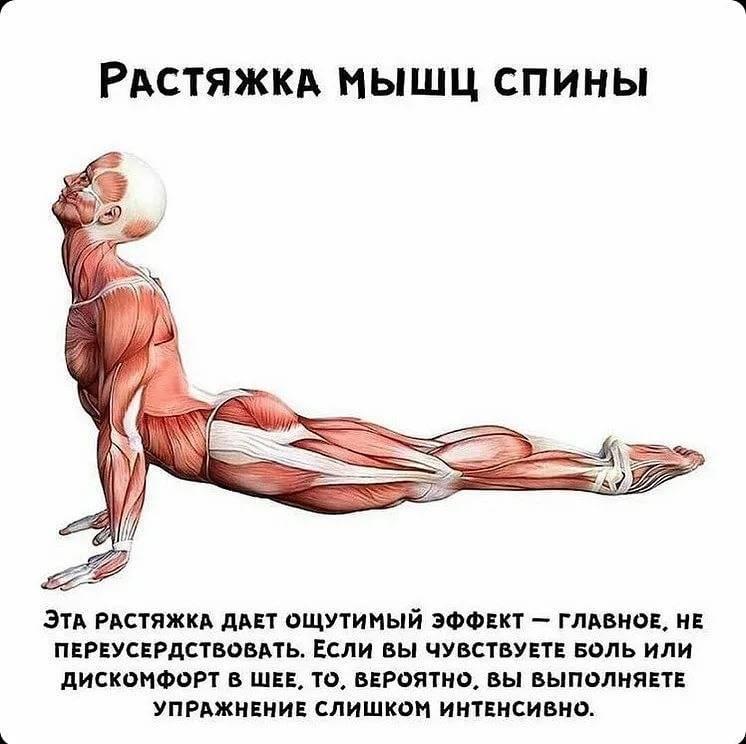 Мышцы стабилизаторы - что это и как развивать | pro-md.ru