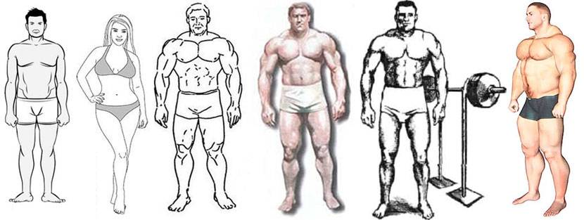 Как определить тип телосложения?