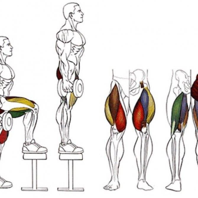 Упражнения для ног (топ-30): для тренировок в зале и домашних условиях