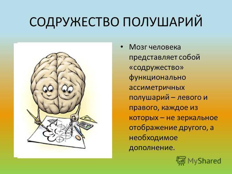 Тренировки для мозга: какие они бывают, и зачем они нужны. советы специалиста