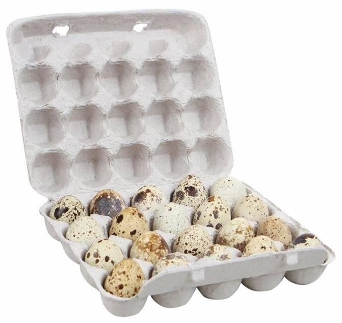 Сколько холестерина в перепелиных яйцах?