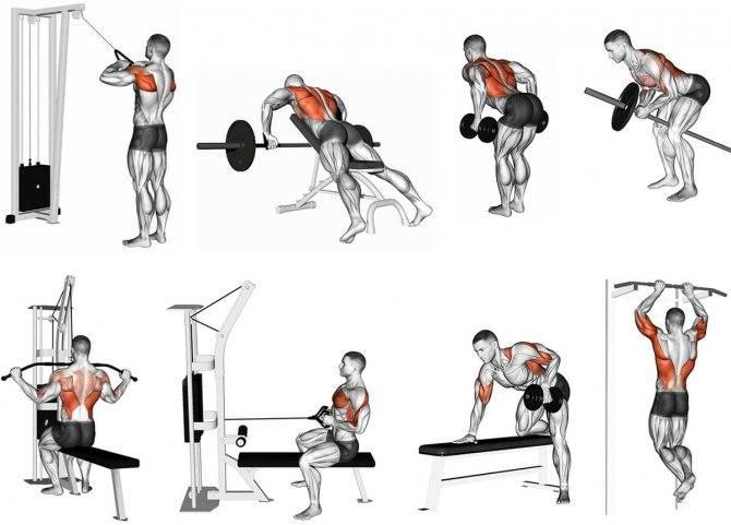 Программа тренировки плеч в тренажерном зале